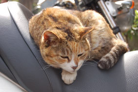a_cat_on_the_bike